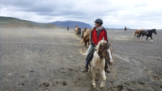 Selfoss, Island: riding tour in Iceland