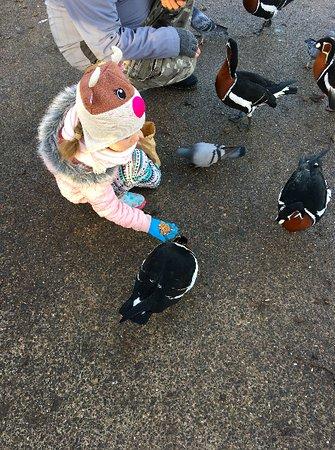 Washington, UK: Cheecky Birds