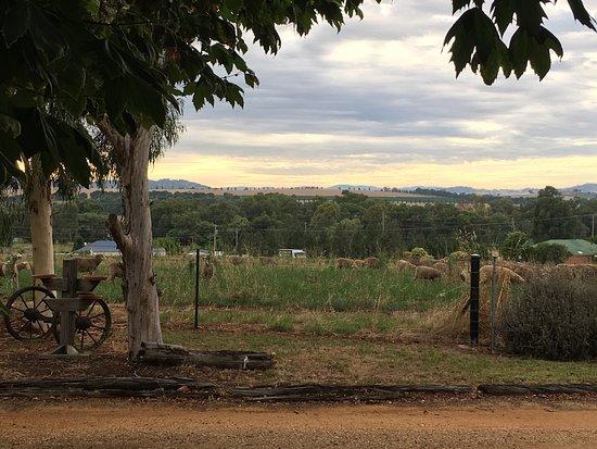 Cowra, Australia: photo1.jpg