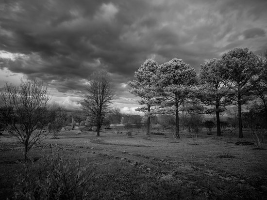 Harvey's Garden: A second view of the park - IR lense