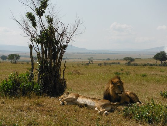 Africa Unike Adventures & Safaris