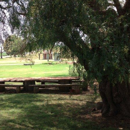 Pokolbin, Australia: Pepper Trees
