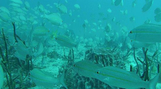 Zatoka Simpson, Sint Maarten: 8445019EE90321943B570C2E5AE3BE3E_large.jpg