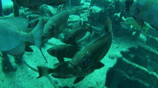 Zatoka Simpson, Sint Maarten: 31B18D21481422152743503D91535498_large.jpg