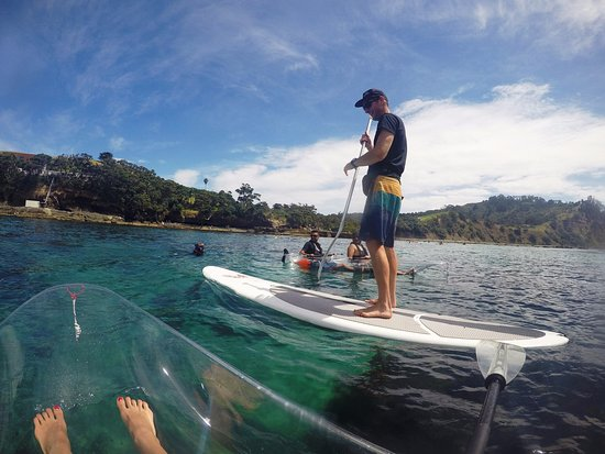 Leigh, นิวซีแลนด์: Brook giving a guided tour on his paddle board