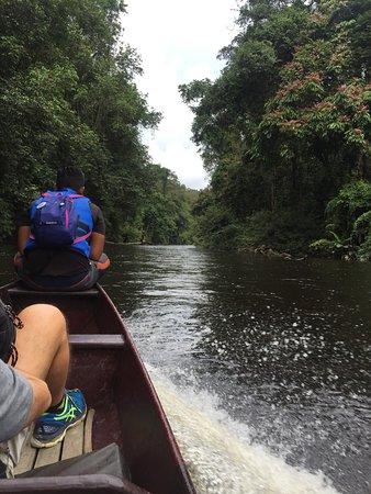 Kuala Tahan, มาเลเซีย: Sortie baignades dans les bassins