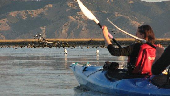 Blenheim, Neuseeland: Love paddling