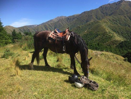 Geraldine, New Zealand: photo1.jpg