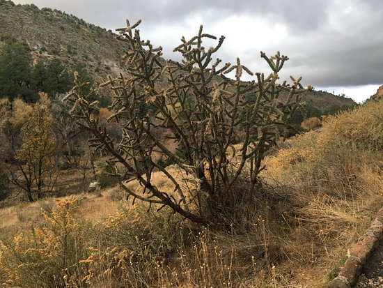 Los Álamos, Nuevo Mexico: A large cactus on the edge of the trail.