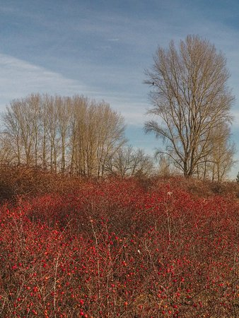 Delta, Canadá: Rose hips and trees
