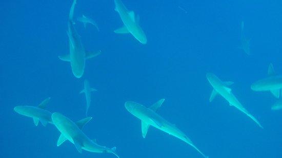 One Ocean Diving