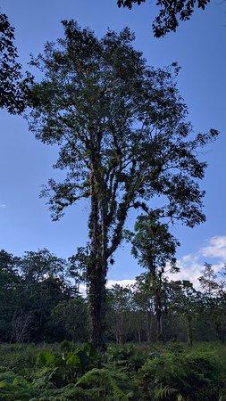 La Virgen, Costa Rica: Sendero del Rio