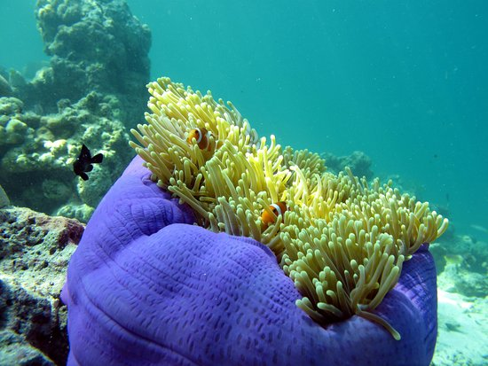 Semporna District, Malesia: Paradise for Nemo beneath the sea in Mataking Island