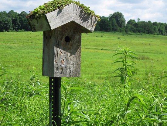 Kennett Square, Pensylwania: Bird house on the way to Italian Water Gardens