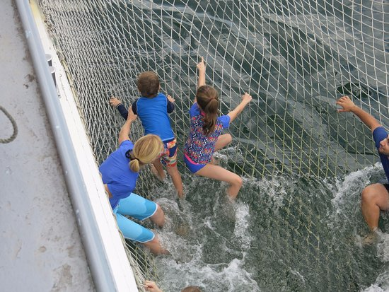 Nelson Bay, Australia: In the boom net.