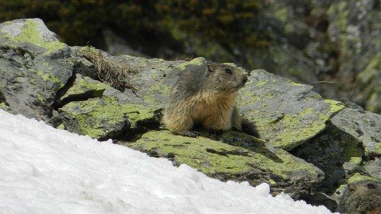 Candanchu, Espagne : Marmotas en el Bosque de Sansanet