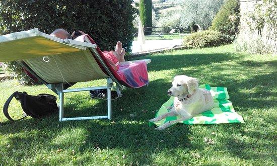 Zdjęcie Montefollonico