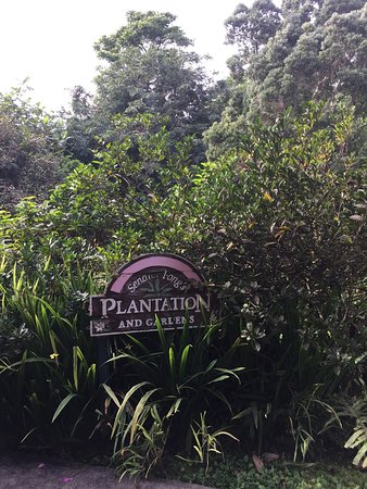 Senator Fong's Plantation and Gardens : photo1.jpg
