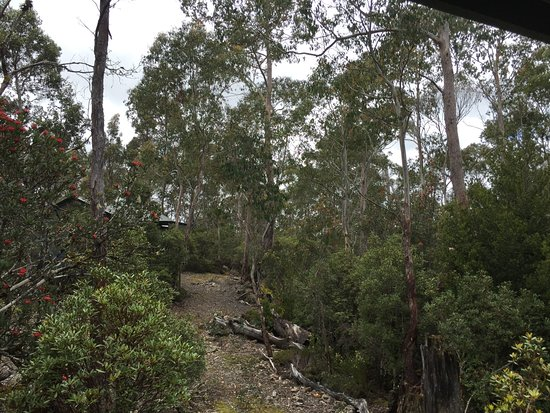 Cradle Mountain Wilderness Village: View from cabin