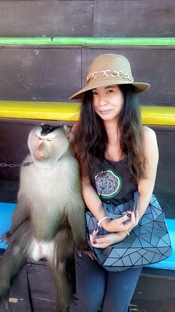 Chiang Mai Monkey Centre : C360_2017-01-16-12-59-56-468_large.jpg