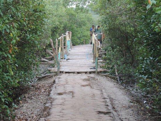 Bakkhali, Ấn Độ: Henry's island