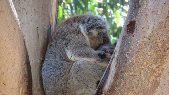 Hanson Bay, Australia: Sleeping