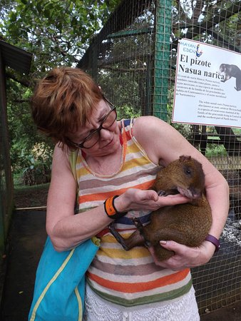 West End, Honduras: The agouti taken from it's cage and handed to me