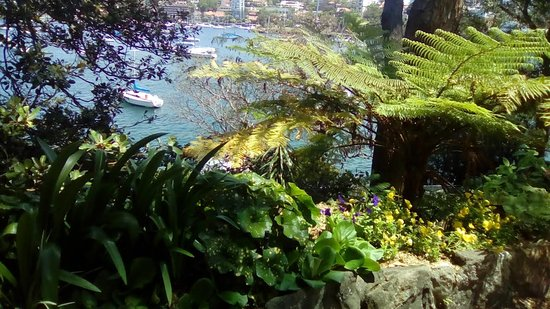 North Sydney, Australia: View of Harbour from terrace at Nutcote