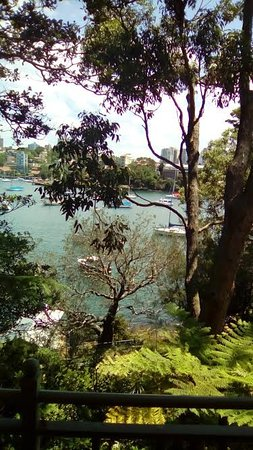North Sydney, Australia: View of Harbour from Nutcote