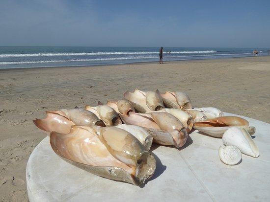 Kotu Beach: ビーチと貝殻