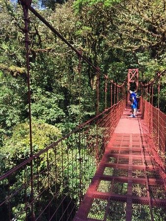 Monteverde Cloud Forest Reserve, Costa Rica: photo0.jpg