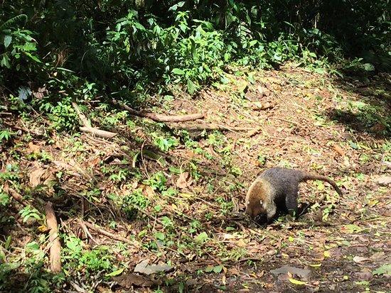 Monteverde Cloud Forest Reserve, Costa Rica: photo1.jpg