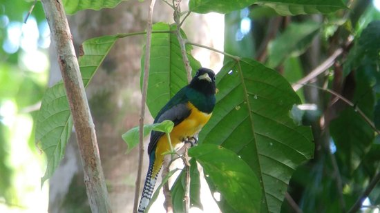 Drake Bay, Costa Rica: photo of our  Bird waching Tour in  our  primary forest Farm