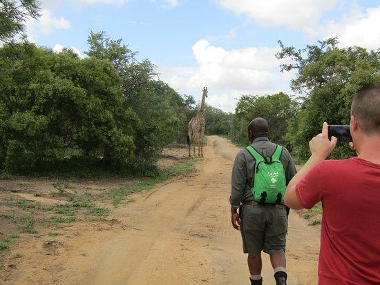 Thornhill Safari Lodge: Bush walk with Patrick.