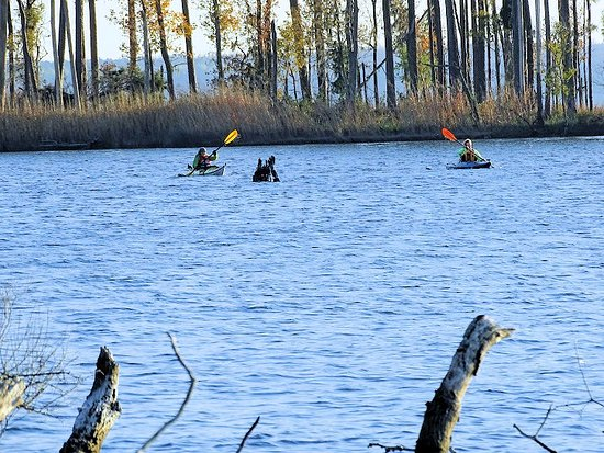 Washington, Carolina del Nord: kayakers on water