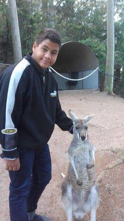 Nowra, Αυστραλία: photo0.jpg