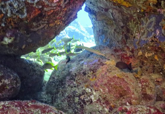 English Harbour, Antigua: Pillars of Hercules