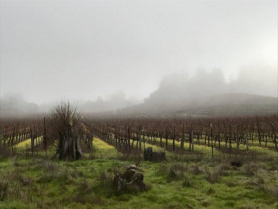 Glen Ellen, CA: photo0.jpg