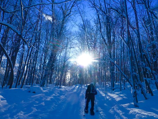 Blue Mountains, Canada: Beautiful blue sky day along the snowshoe trails