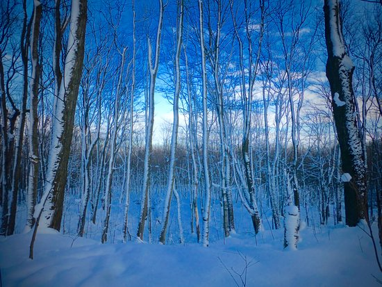Blue Mountains, Canada: A walk in the winter woods
