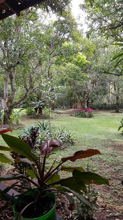 Atenas, Costa Rica: Lovely yard