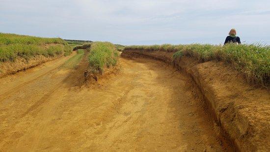 Νααλέχου, Χαβάη: Much of the trail looks like this - deep ATV paths that wind like a maze