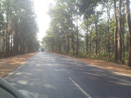 Joypur Jungle: Beautiful metalled roads inside