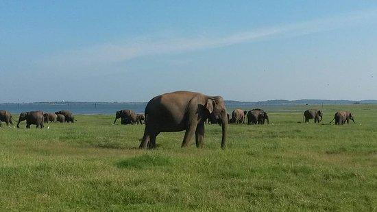 Katunayake, Sri Lanka: Safari with Ruwan