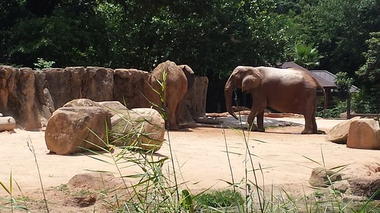 The Elephants Picture Of Riverbanks Zoo And Botanical