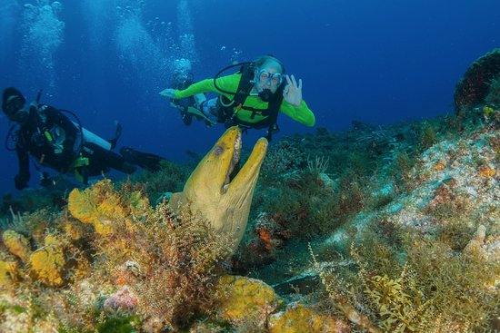 Eco Divers: a friendly green moray eel