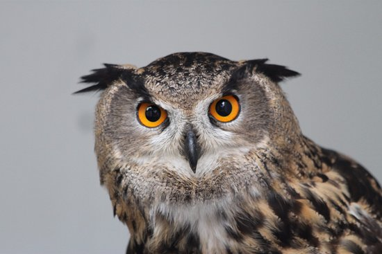 Preston, UK: One of the beautiful birds