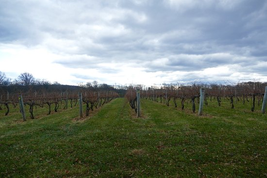 Leesburg, VA: vineyards