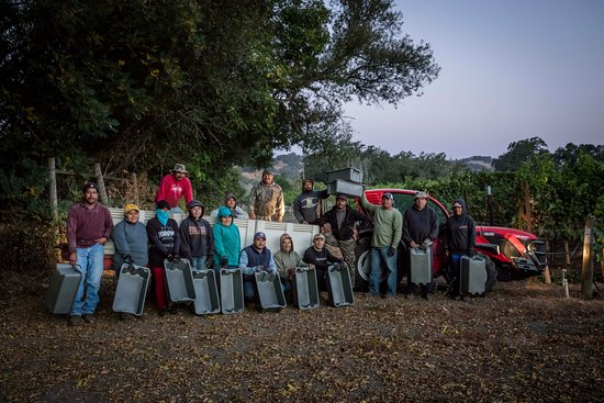 Healdsburg, Californië: 2016 Harvest, Hawkes Stone Vineyard