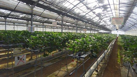Mimasaka Farm
